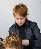 Woman cutting hair Stock Photography
