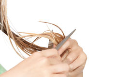 Woman cutting hair. Woman cutting wet hair on white isolated background Stock Photos