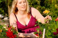 Woman cutting the roses in garden Stock Photos