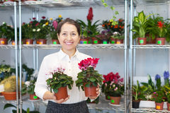 Woman with Cyclamen surrounded by different flowers Royalty Free Stock Images