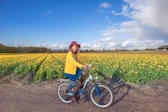 Woman cycling along  tulip fields Stock Image