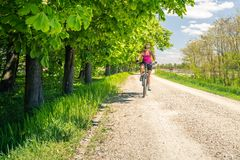 Woman cycling a mountain bike in city park, summer day. Woman cycling a mountain bike in a city park, summer day. Inspire and motivate concept for outdoors royalty free stock images