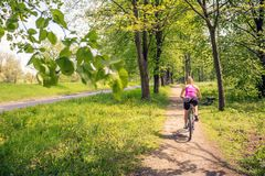Woman cycling a mountain bike in city park, summer day Royalty Free Stock Photos