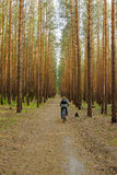 Woman is cycling in pine forest. Woman is cycling along footpath  in the pine forest Royalty Free Stock Photo