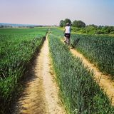 Woman cycling wheat field Stock Image