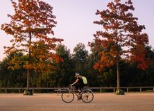 Woman cyclist riding her bike in a londons park, between two red leaf trees
