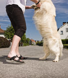 Woman dancing with a dog Royalty Free Stock Photography