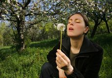 Woman with Dandelion. Attractive woman kneeling in grass in blooming orchard holding and blowing on seeding dandelion flower Stock Photo