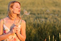 Woman and dandelion Royalty Free Stock Image