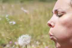 Woman and a dandelion royalty free stock image
