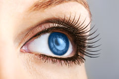 Female blue eye with false lashes Royalty Free Stock Photos