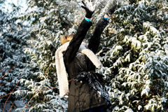 Woman is defending herself playing snowball fight Stock Photography