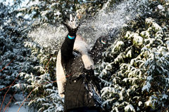 Woman is defending herself playing snowball fight Royalty Free Stock Photos