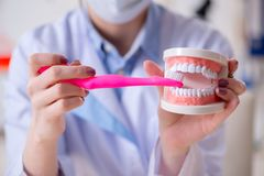 The woman dentist practicing work on tooth model. Woman dentist practicing work on tooth model stock photography