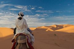 The woman in desert. Tourist woman in desert sahara Stock Images