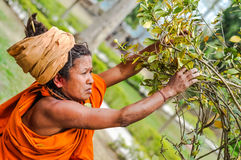 Woman in Dibrugarh in Assam. Dibrugarh, Assam - circa March 2012: Native woman in orange clothes and with brown turban on her head touches branches of tree and royalty free stock photography