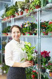 Woman with Dieffenbachia  in flower store Stock Photography