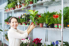 Woman with Dieffenbachia Royalty Free Stock Photo