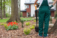 Woman digging flowerbeds Stock Images