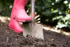 Woman digging in garden. Close up crop of woman digging in garden Royalty Free Stock Photos