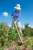 Woman is digging with hoe in the garden stock photos