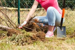 Woman digging hole in garden stock image
