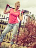 Woman digging hole in garden royalty free stock images