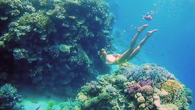 Woman dive underwater in snorkeling diving mask. Beautiful woman dive underwater in snorkeling diving mask into clear blue sea water. Tropical underwater reef stock video