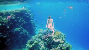 Woman dive underwater in snorkeling diving mask. Beautiful woman dive underwater in snorkeling diving mask into clear blue sea water. Tropical underwater reef stock video footage