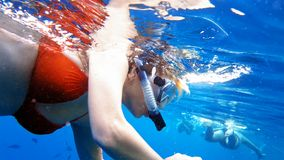 Woman dive underwater in snorkeling diving mask Stock Image