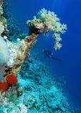 Woman Diver Stock Photo
