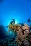 Woman diver. Behind soft coral Stock Photo