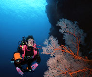 Woman Diver and Sea Fan. A woman scuba diver glides past a huge gorgonian, sea fan off a wall in the Solomon Islands Royalty Free Stock Photo