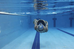 Woman diving. Underwater picture of a woman diving in the swimming pool Royalty Free Stock Photography