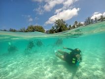 Scuba diving underwater tour in Rarotonga Cook Islands. Woman diving instructor leading a scuba diving underwater tour in Rarotonga, Cook Islands. Real people stock image