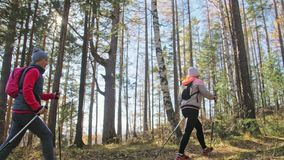 Woman do Nordic walking in nature. Girls and children use trekking sticks and nordic poles, backpacks. Family travels stock video