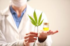 Woman doctor holding a cannabis leaf and oil.alternative medicine. Woman doctor holding a cannabis leaf and oil alternative medicine stock photo