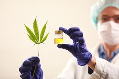 Woman doctor holding a cannabis leaf and oil. alternative medicine. Woman doctor holding a cannabis leaf and oil alternative medicine stock images