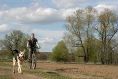 Woman with dog. Woman cycling with alsatian dog Stock Photo
