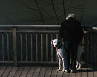Woman and Dog. An elderly woman and her dog by a pond Royalty Free Stock Photography