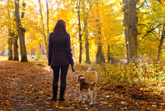 Woman with dog in autumn park royalty free stock photography