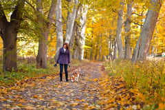 Woman with dog in autumn park royalty free stock images