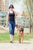 Woman and dog bullmastiff. Walking to the park. girl holding a puppy on a leash stock photography