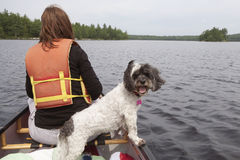 Woman and dog in canoe. Woman in canoe on lake with dog companion stock photos