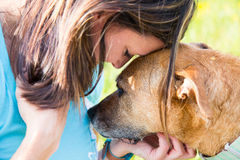 Woman and dog console each other Royalty Free Stock Image