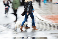 Woman with a dog crosses the street Stock Image