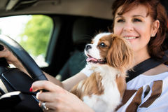 Woman and dog driving car Royalty Free Stock Images