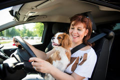 Woman and dog driving car Stock Images