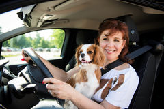 Woman and dog driving car Stock Image