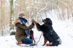 Woman and dog giving high-five in the snow. On winter day royalty free stock images